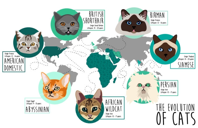 catMigrationMap